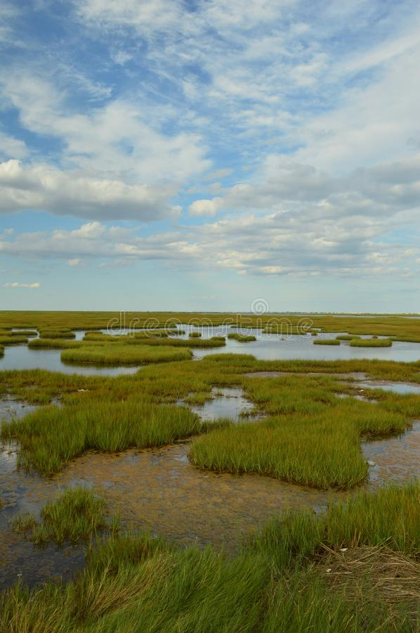 Bay marshes royalty free stock photography