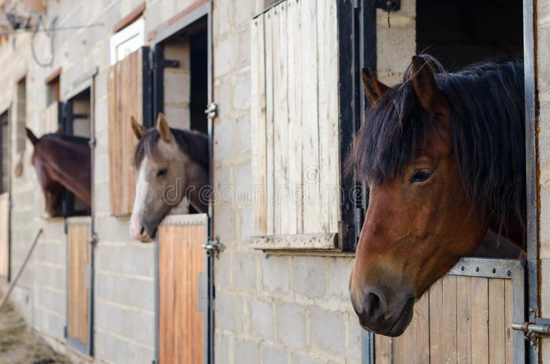 Three horses in the stall at the stable stock images