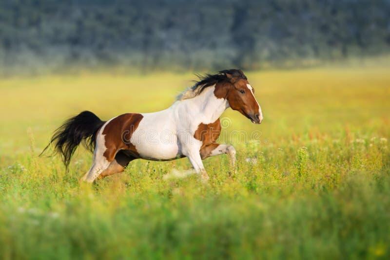Bay pinto horse stock photo