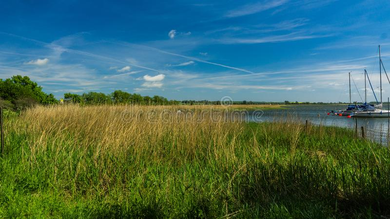 Bay with reed - landscape royalty free stock photo