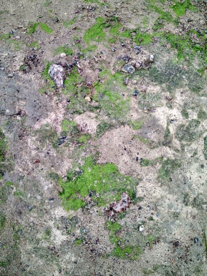 Bay shore sand seaweed. Photo bay shore sand seaweed stock photography