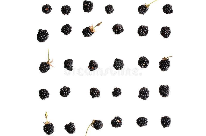 Baya de Blackberry en un fondo blanco foto de archivo libre de regalías