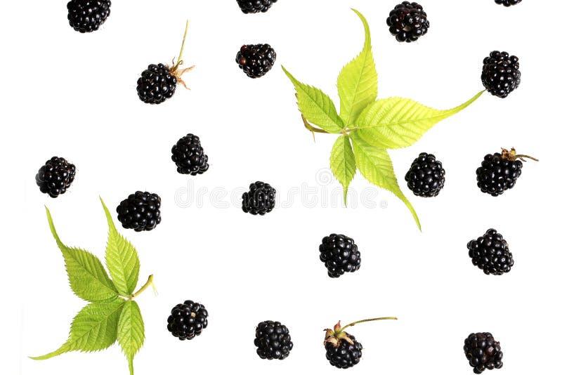 Baya de Blackberry en una opinión superior del fondo blanco de un modelo fresco de las bayas del verano plano del estilo imágenes de archivo libres de regalías