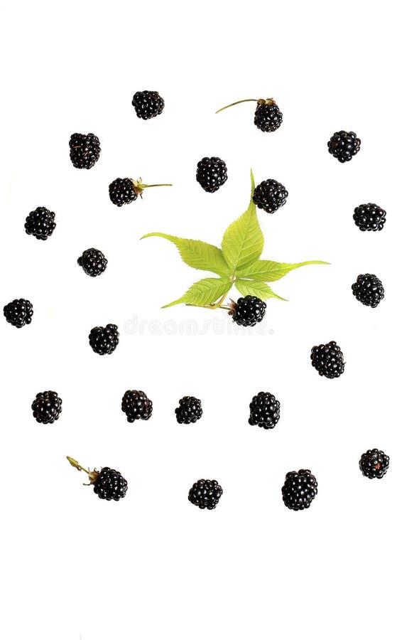 Baya de Blackberry en una opinión superior del fondo blanco de un modelo fresco de las bayas del verano plano del estilo foto de archivo libre de regalías