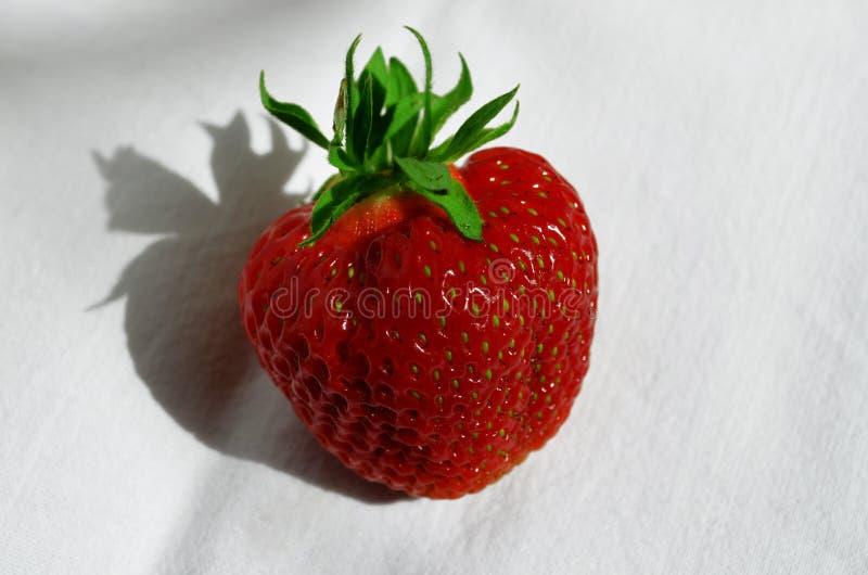 Baya de la fresa en un primer blanco del fondo imagenes de archivo