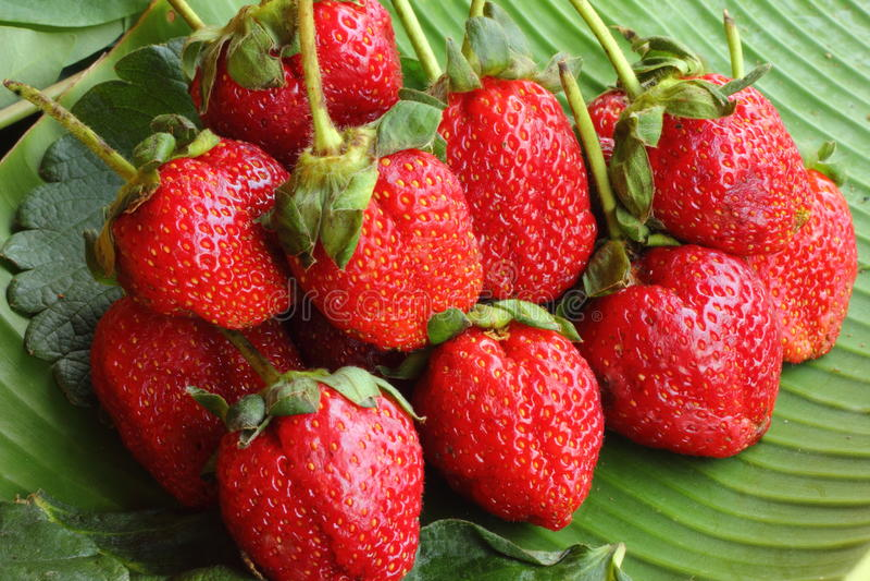 Baya de la fruta de la fresa foto de archivo