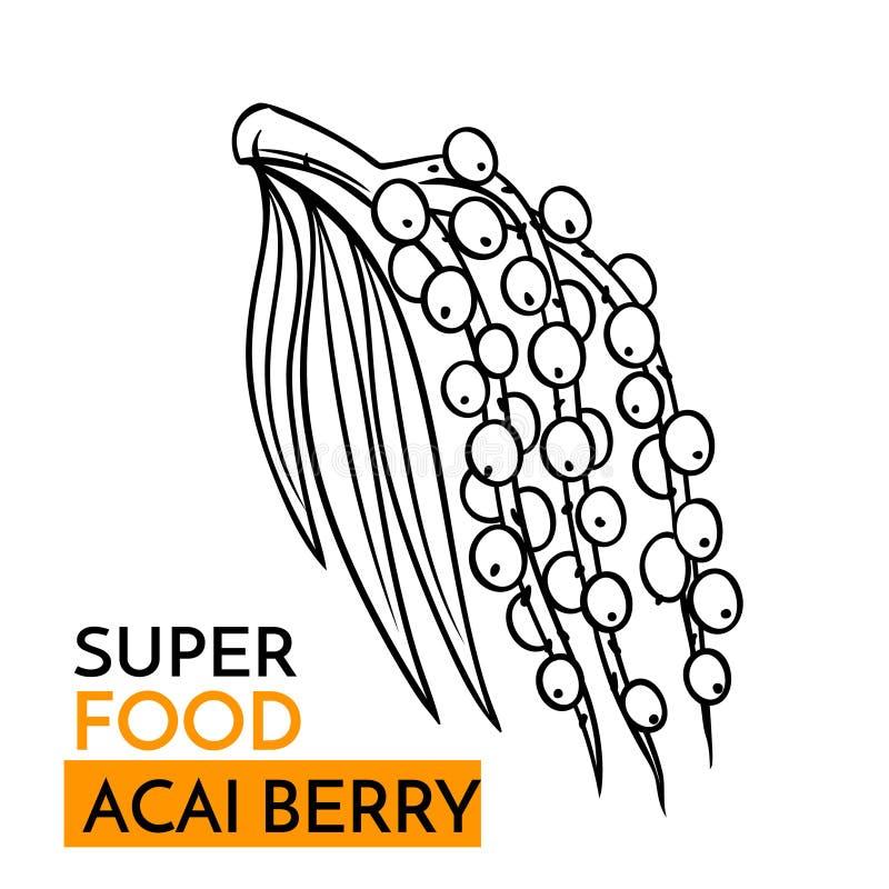 Baya del acai del superfood del icono del vector libre illustration