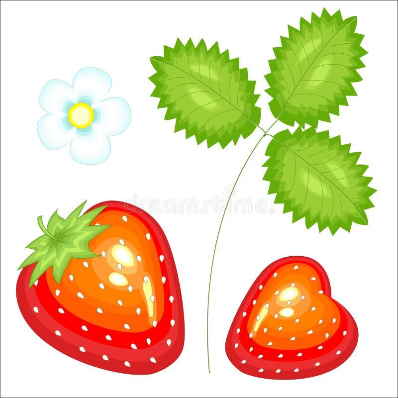 Baya roja hermosa madura Fresa sabrosa, dulce jugosa, una fuente de vitaminas útiles y oligoelementos Ilustraci?n del vector libre illustration