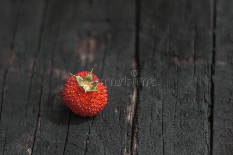 Baya salvaje roja fotografía de archivo
