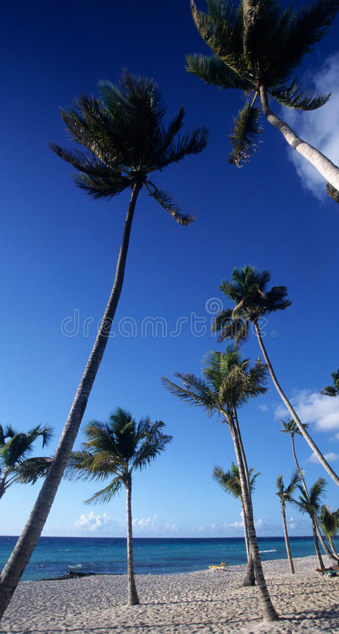 Bayahibe palmtrees setzen - Dominikanische Republik auf den Strand lizenzfreie stockbilder