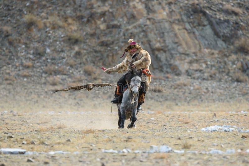 Bayan-Ulgii, Mongolië - Oktober 01, 2017: Traditioneel Gouden Eagle Festival Vliegend Gouden Eagle And Unknown Mongolian Hunter royalty-vrije stock afbeelding