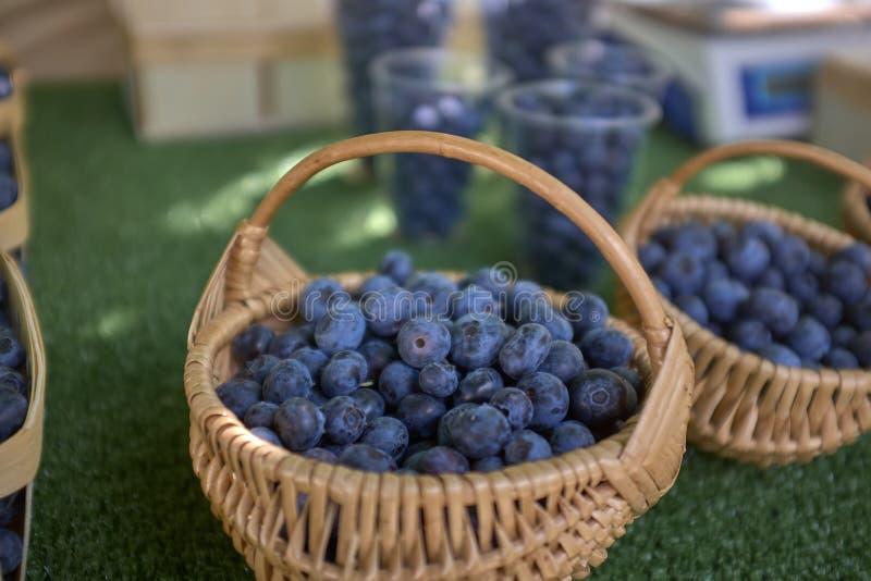 Bayas azules cultivadas en pequeñas cestas redondas fotos de archivo libres de regalías