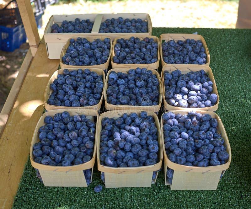 Bayas azules cultivadas en pequeñas cestas en un mercado imágenes de archivo libres de regalías