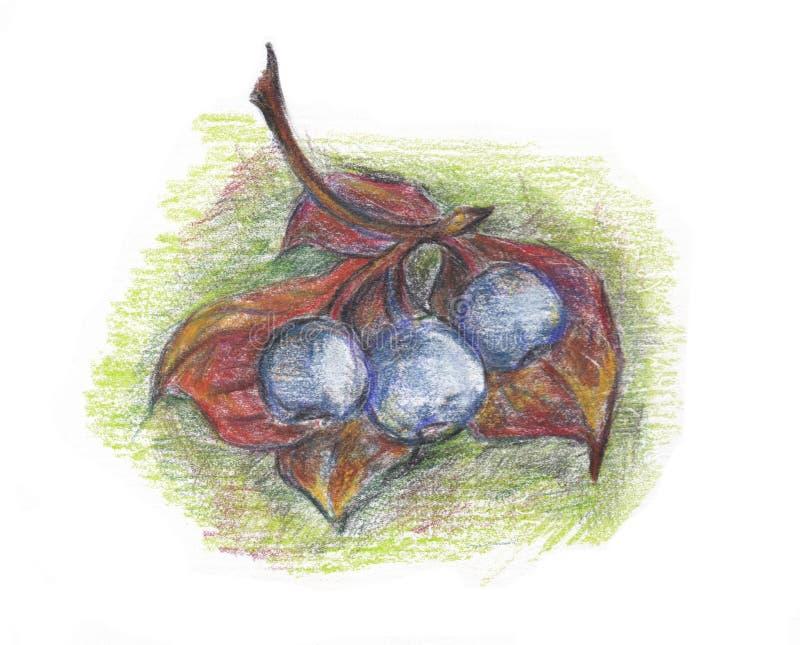Bayas coloridas del otoño en la rama fotografía de archivo