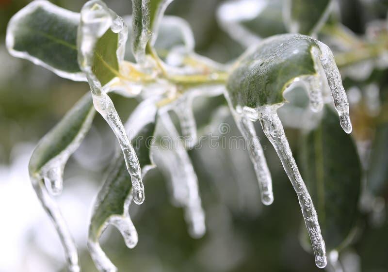 Bayas congeladas imagen de archivo