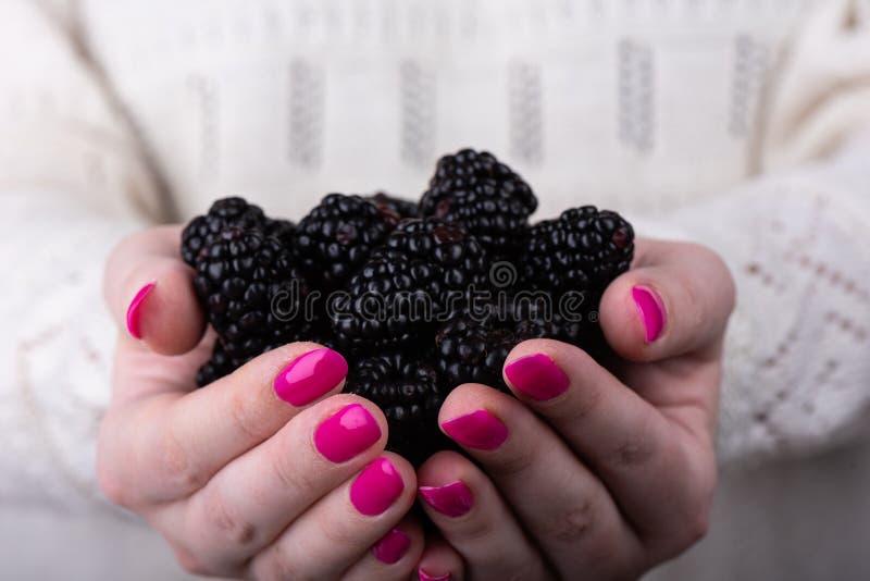 Bayas de Blackberry en las palmas de la muchacha fotografía de archivo libre de regalías