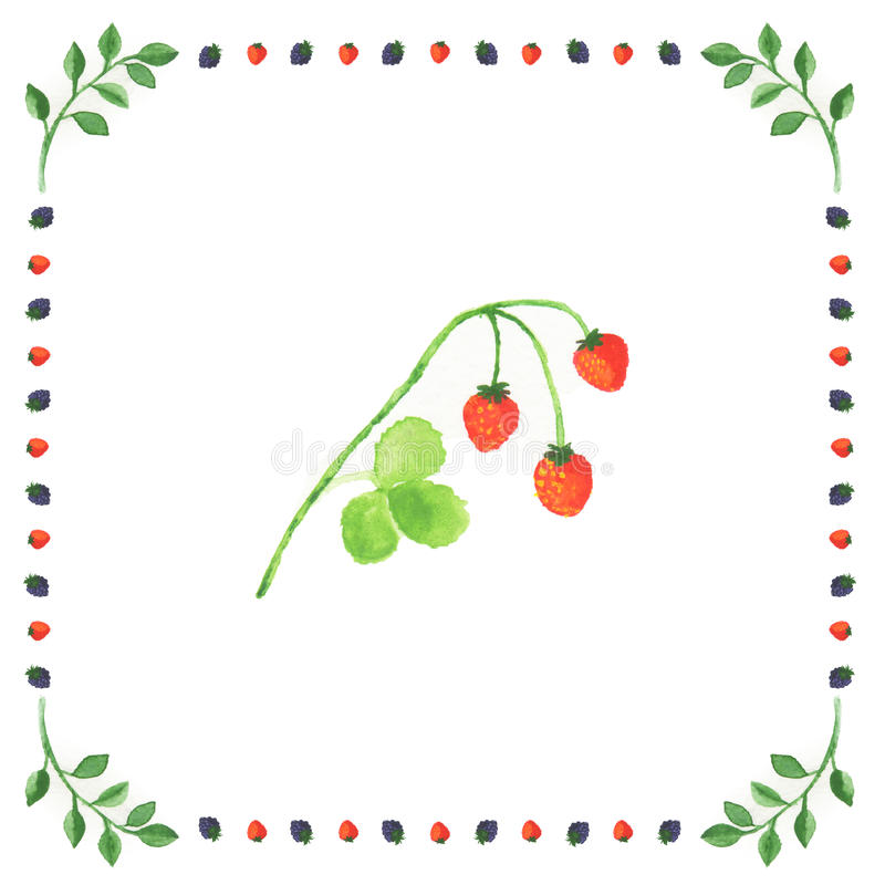 Bayas de la fresa salvaje en un fondo blanco enmarcado en baya fotos de archivo