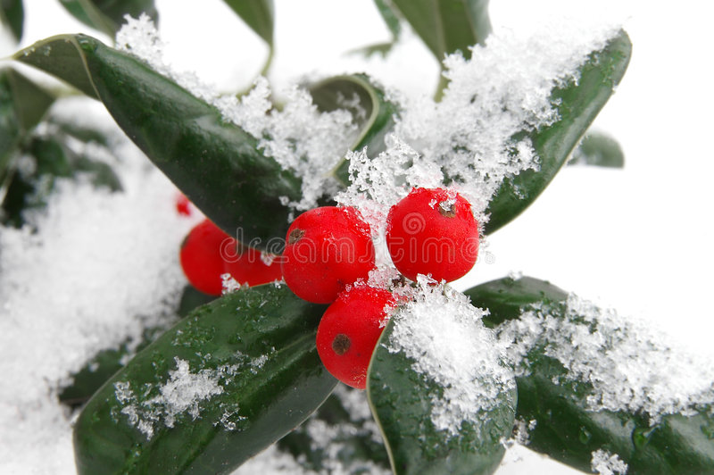 Bayas de la nieve foto de archivo libre de regalías
