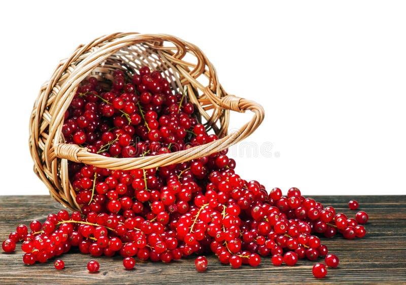 Bayas de la pasa roja en una cesta imagen de archivo libre de regalías