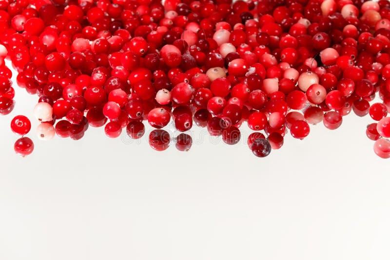 Bayas de Superfood por completo de los antioxidantes - arándanos orgánicos foto de archivo libre de regalías