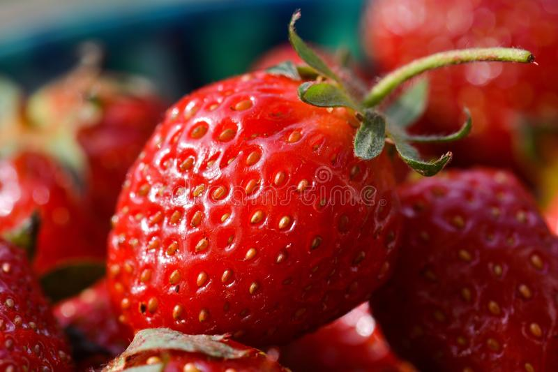 Bayas maduras del cierre de la fresa para arriba foto de archivo