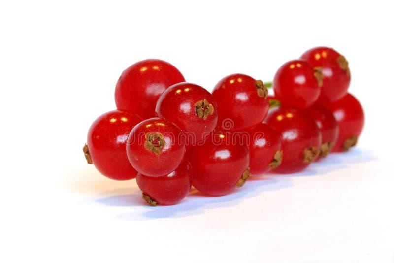 Download Bayas rojas foto de archivo. Imagen de blanco, fruta, alimento - 190112