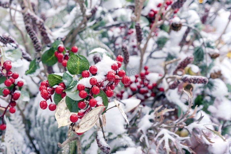 Bayas rojas decorativas de la Navidad en la nieve imagen de archivo libre de regalías