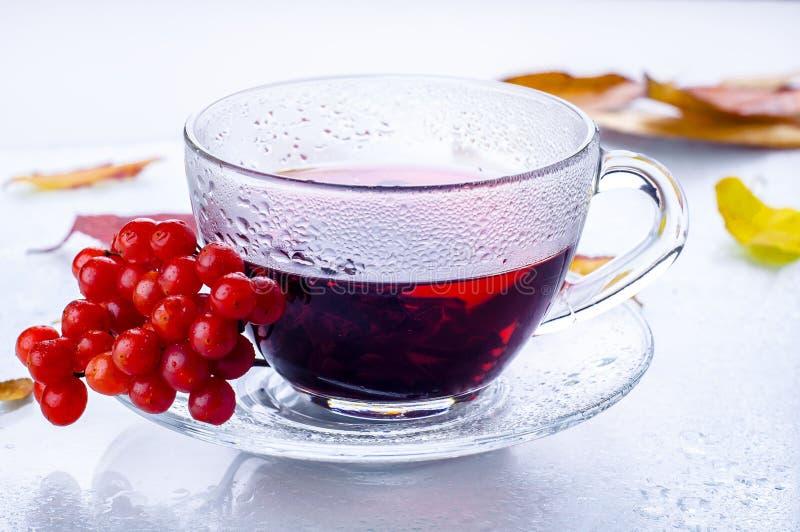 Bayas rojas viburnum y taza del té imágenes de archivo libres de regalías
