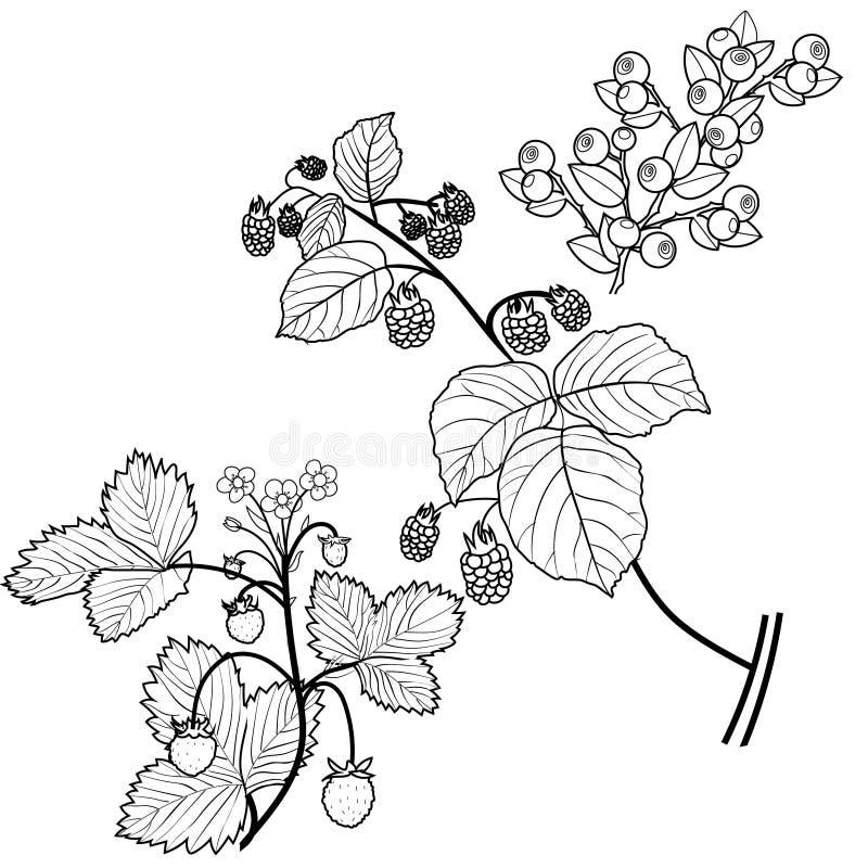 Bayas salvajes ilustración del vector