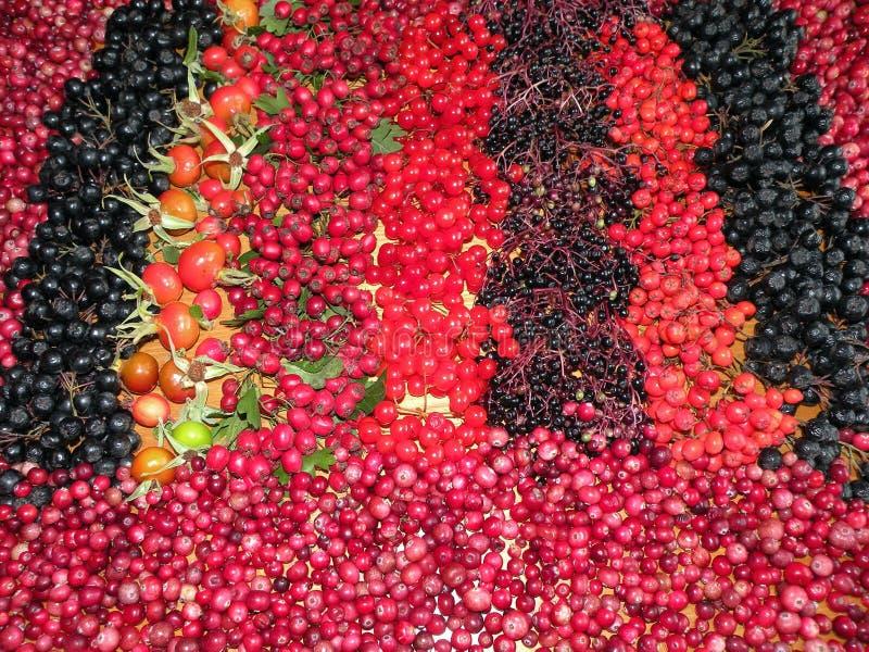Bayas salvajes del otoño colorido imágenes de archivo libres de regalías