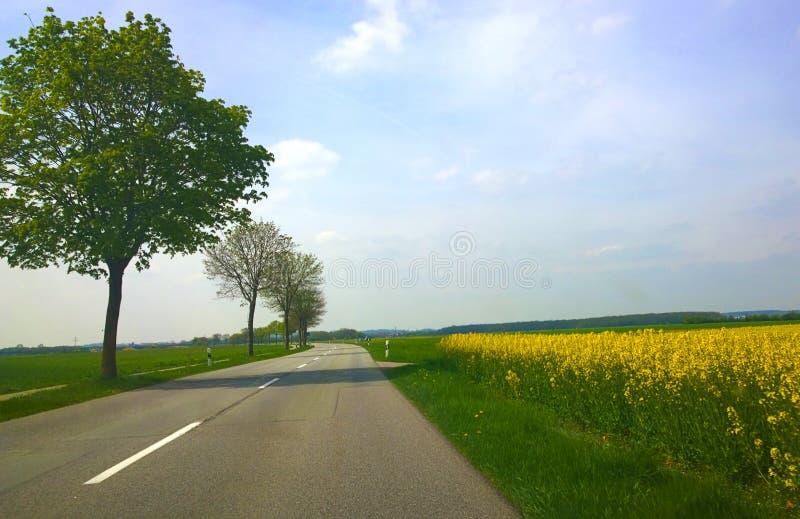 Bayern - vår, landsväg bland fält med träd och y arkivfoto