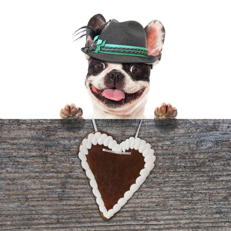 Bayersk hund royaltyfria foton