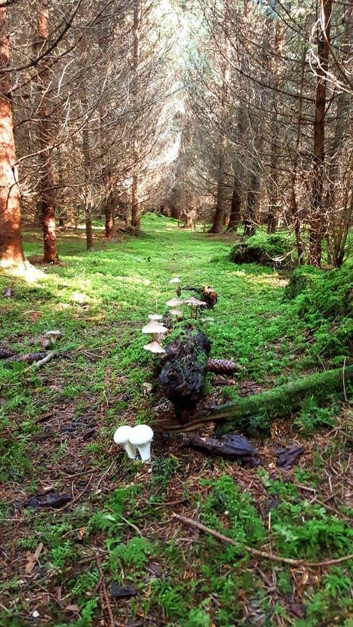 Bayersk skog royaltyfri fotografi