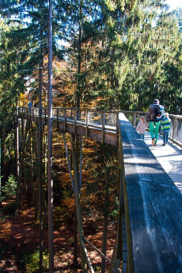 Bayersk skog royaltyfria bilder