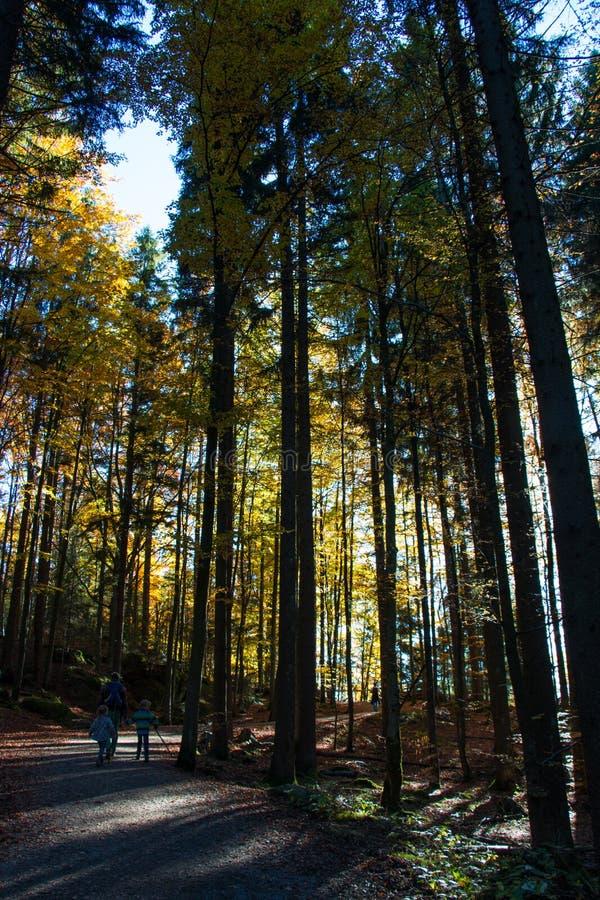 Bayersk skog royaltyfri foto