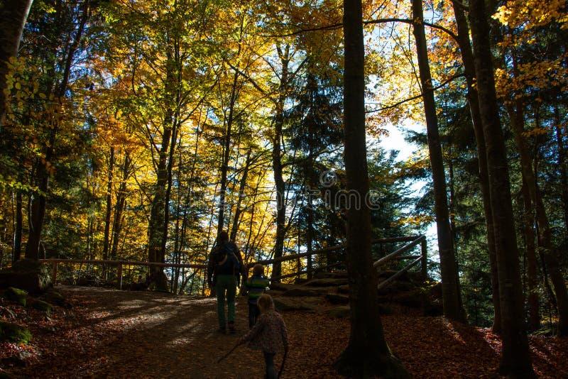 Bayersk skog royaltyfri bild