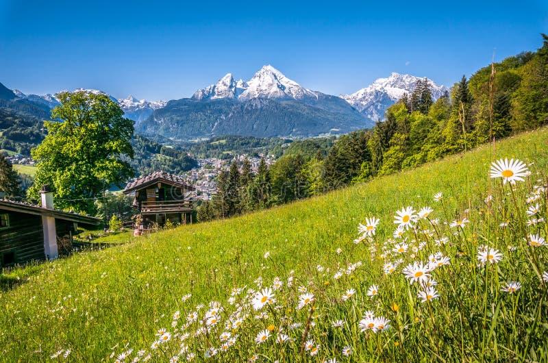 Bayerska fjällängar med härliga blommor och Watzmann i vår, Bayern, Tyskland royaltyfri foto