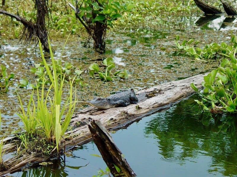 bayou Λουιζιάνα στοκ φωτογραφία με δικαίωμα ελεύθερης χρήσης