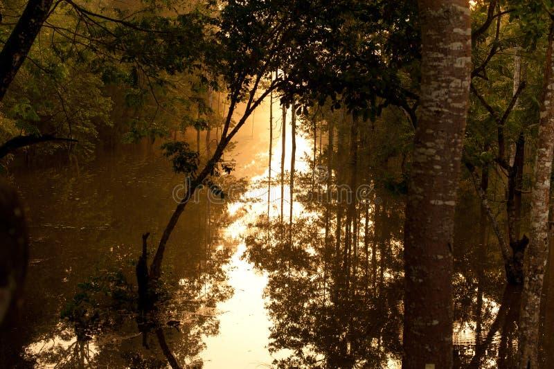 Bayou στοκ φωτογραφίες με δικαίωμα ελεύθερης χρήσης