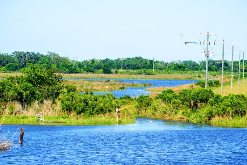 bayou Luizjana obrazy stock