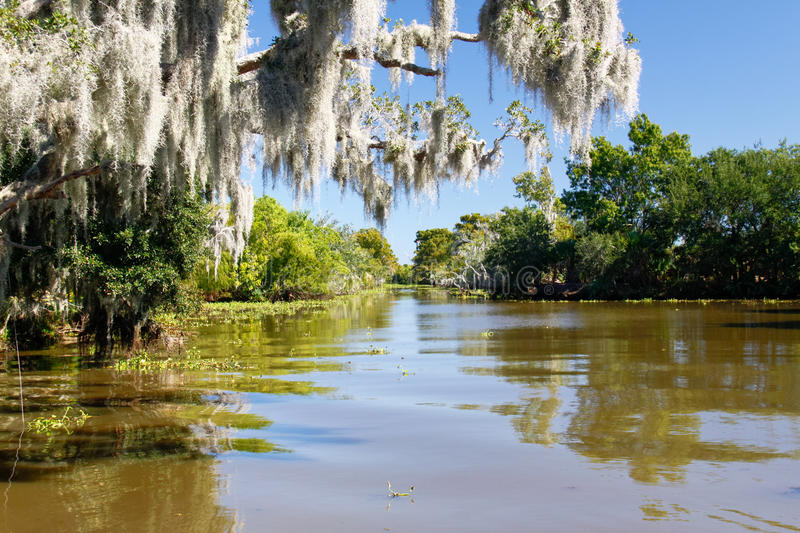 Bayou and Spanish Moss. Spanish Moss hangs from a tree in the Louisiana Bayou country just south of New Orleans stock photos
