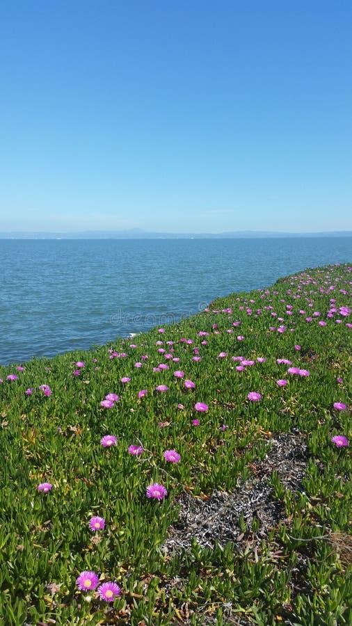 Bayside Flowers stock photos