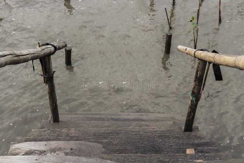 Baza wypadowa, reforestation, mangrowe, gacenie, katastrofa naturalna fotografia royalty free