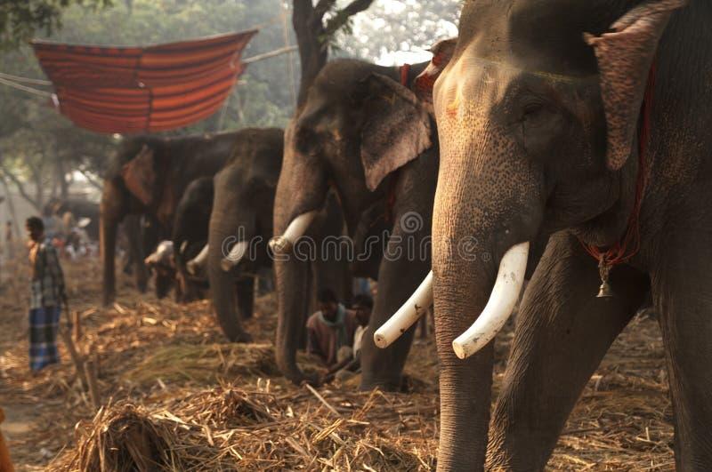 Bazar d'éléphant images libres de droits