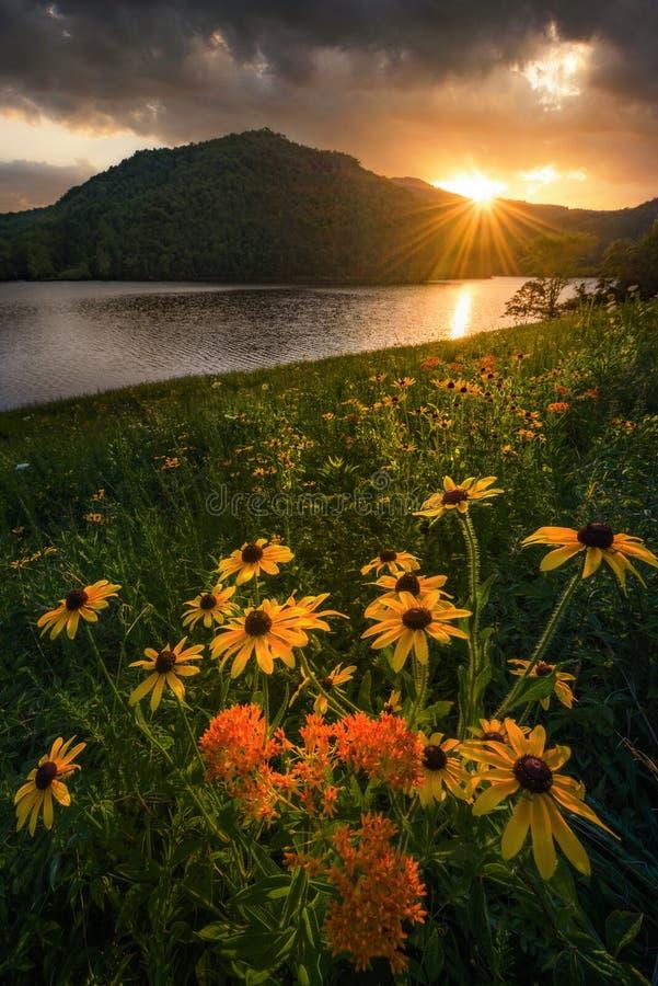 BBlack a observé Susans, coucher du soleil déprimé, les Appalaches photo stock
