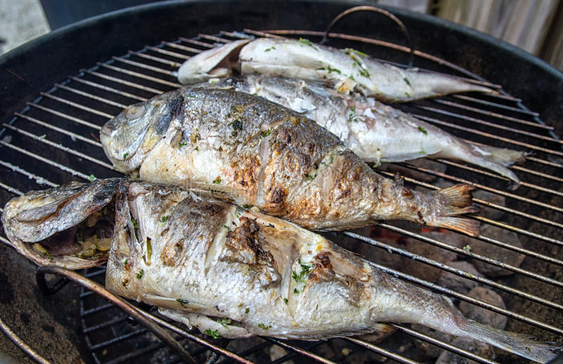 BBQ Dorade. Dorade fishes on the barbecue royalty free stock images