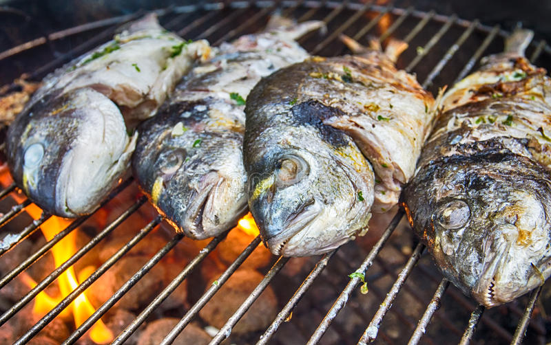 BBQ Dorade. Dorade fishes on the barbecue royalty free stock image