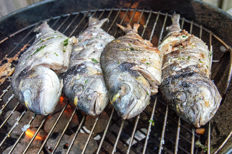 BBQ Dorade. Dorade fishes on the barbecue stock image