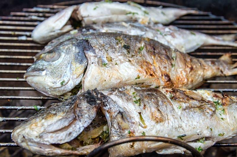 BBQ Dorade. Dorade fishes on the barbecue royalty free stock photos