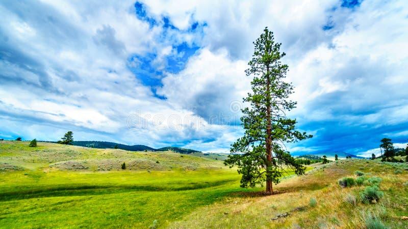 BC垂悬在绵延山的红松树的黑暗的云彩在Okanagen的一个干燥区域沿高速公路5A i9n的 免版税库存图片